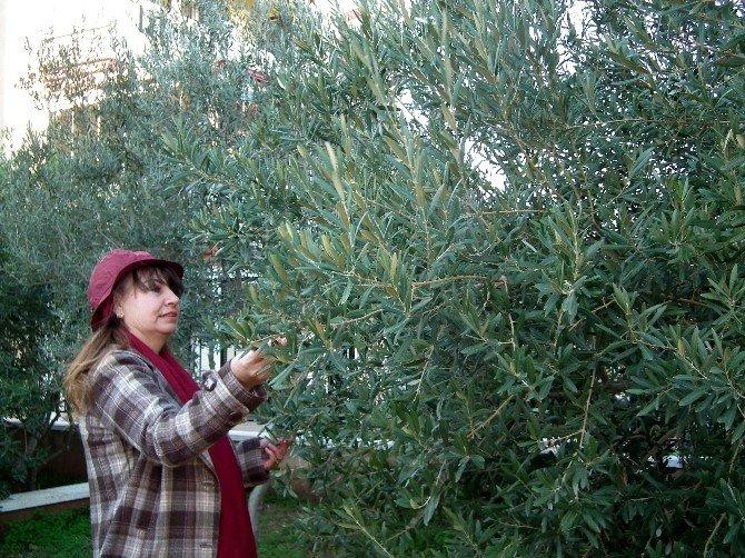 Aydın'da İyi Tarım Uygulamları Sürüyor