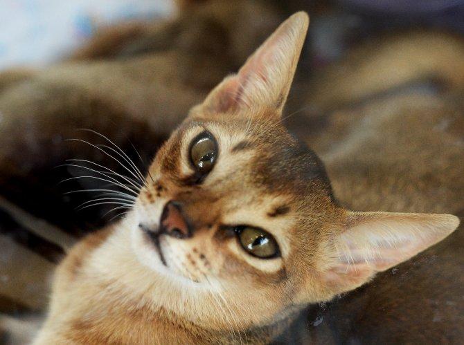 Bilim adamları kanıtladı: Kediler mi yoksa köpekler mi insanlara daha çok bağlı?