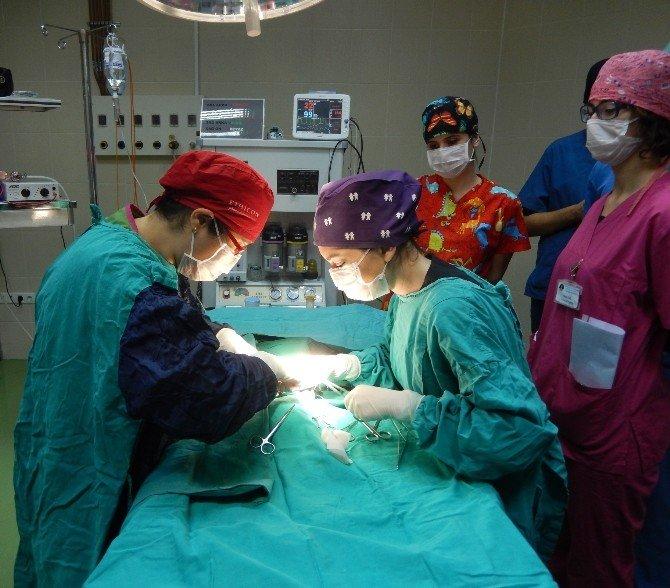 OMÜ Hayvan Hastanesi'nde 2 Bin 35 Hayvan Tedavi Edildi