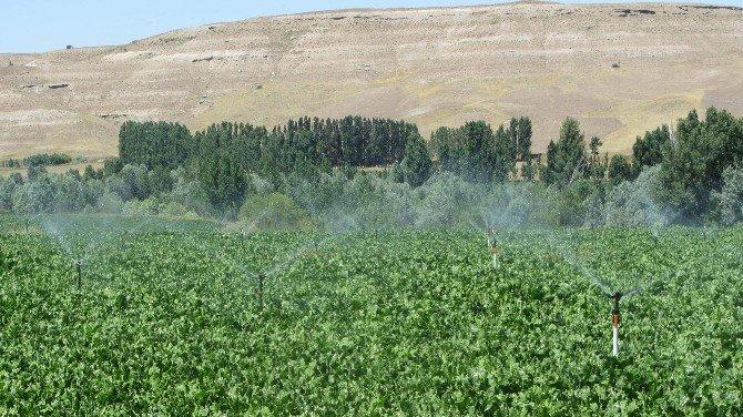 Sivas İl Özel İdaresi Tarım Sektörüne 55 Adet Proje Kazandırdı