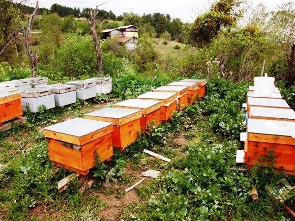 Zonguldak Obm; Bal Üretim Ormanı Sayısını Arttırdı