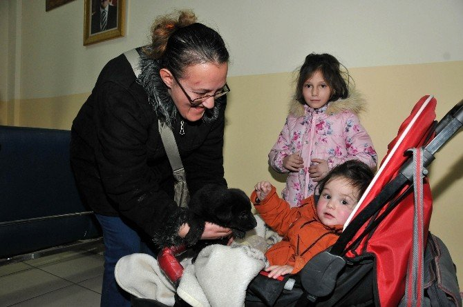 Keçiören Belediyesi Sokak Hayvanlarını Sıcak Yuvaya Kavuşturuyor
