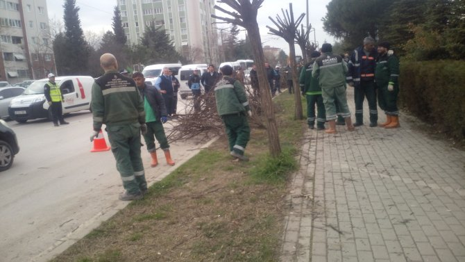 Ağaçları kestirmeme eyleminde 9 gözaltı