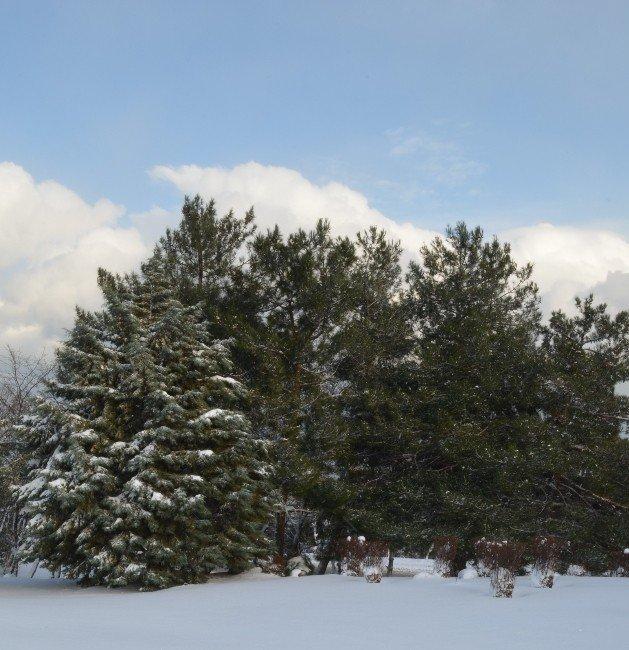 Kar Yağışının Tarıma Etkisi