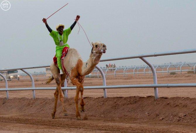 Suudi Arabistan'ın en büyük kültür festivali 'Cenadriye'den renkli görüntüler
