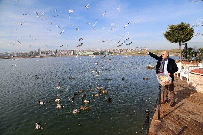 Yabani Ördekler, Büyükçekmece'de Yeniden Yaşam Alanı Buldu