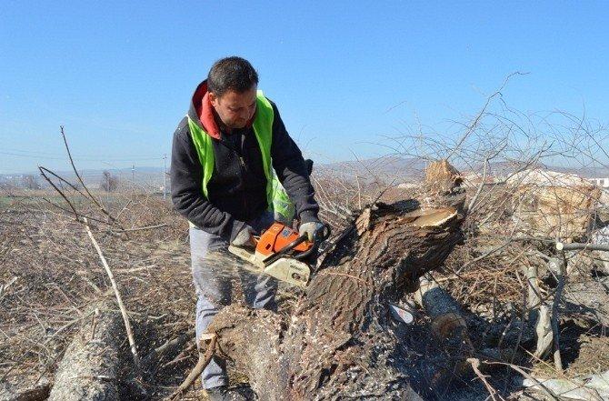 Adronos Çayında Ağaç Budama Çalışmaları