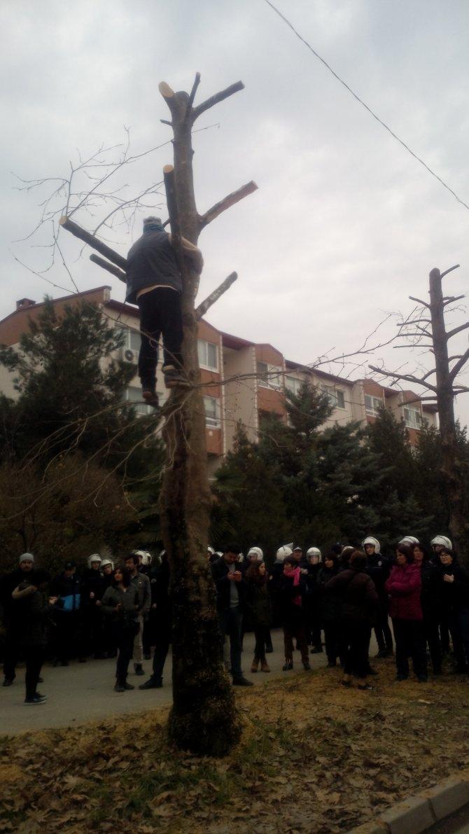 Ağaca çıktılar ancak kesimini engelleyemediler