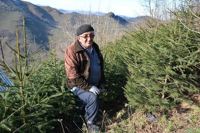 Yatırım Yaptığı İşinden Zarar Edince Hatıra Ormanı Kurmaya Karar Verdi