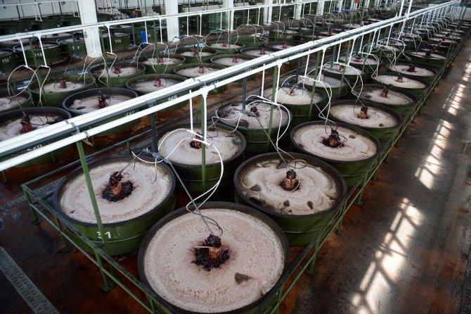 Marmarabirlik saniyede 1 kilo 160 gram ürün satıyor