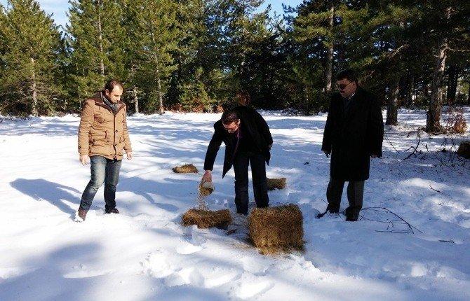 Hisarcık'ta Yaban Hayvanları İçin Doğaya Yem Bırakıldı