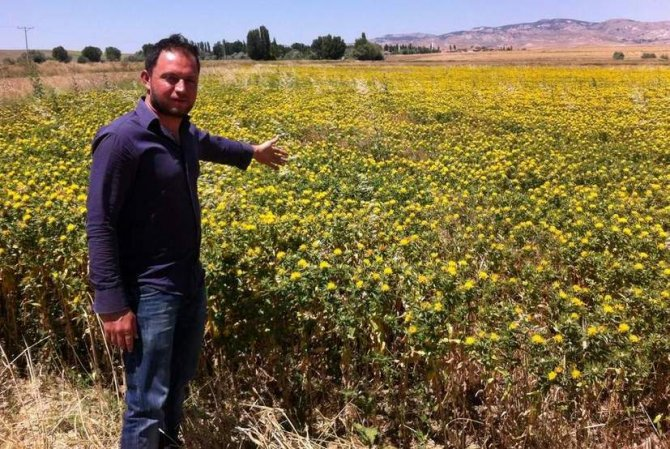 'Yozgat'ta 2 milyon dekar nadas alanı bulunmaktadır'