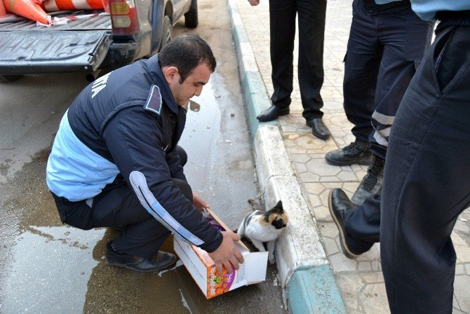 Yaralı Kediye, Zabıtadan Şefkat Eli