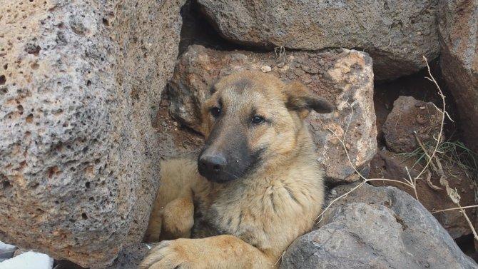 Taşların arasına sıkışan köpeği itfaiye kurtardı