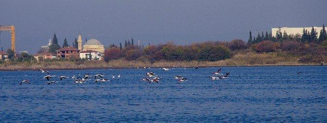 Metropollerin Ortasında Flamingo Cumhuriyeti