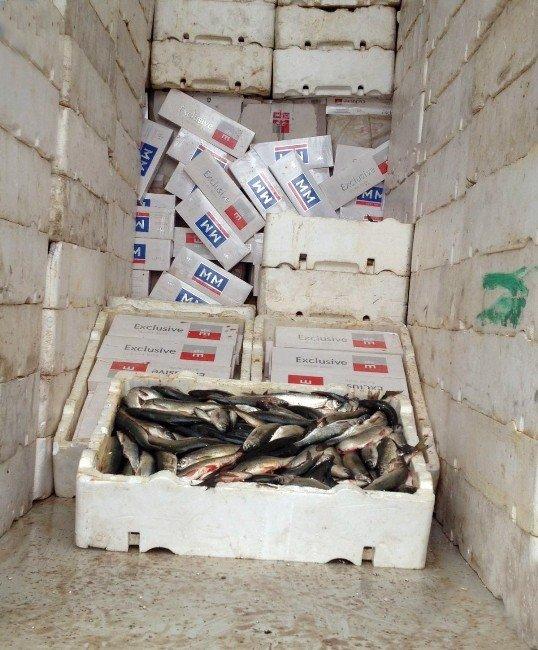 Sigaraları Kokmuş Balıklar Arasına Saklamışlar