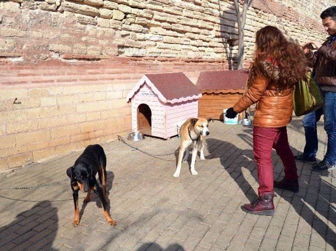 Hayvanseverler, 7'nci Sevgi Günü'nde Buluştu