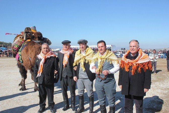Menderes'te Deve Güreşleri Festivali