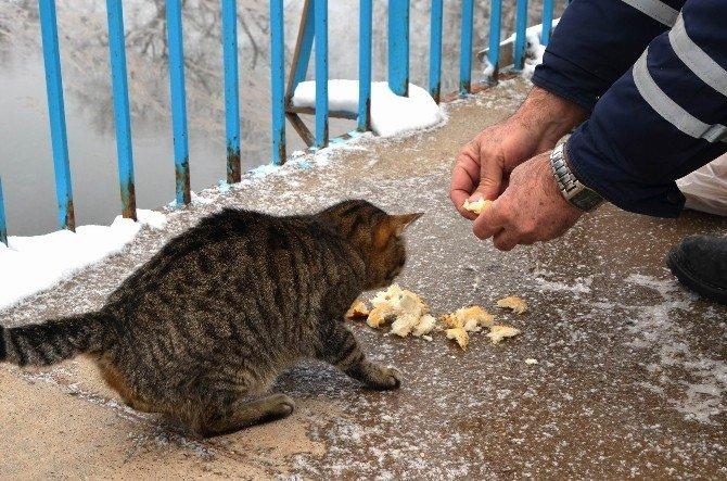 Bünyan Belediyesi Ve Bünyan Esnafı El Ele Doğadaki Hayvanlara Sahip Çıkıyor