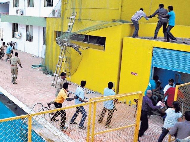 Leopar Okula Girdi, 6 Kişiyi Yaraladı