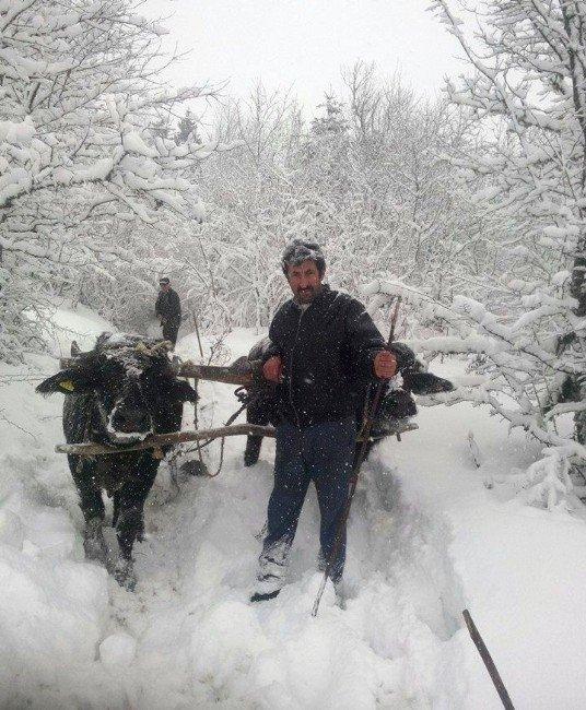 Kar Yolları Kapatınca, İşlerini Kağnılar İle Görüyorlar
