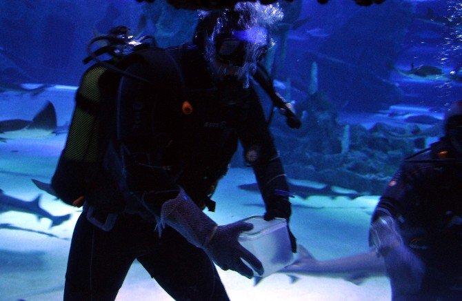 Dalgıçlar Köpek Balıklarını Elleriyle Besliyor
