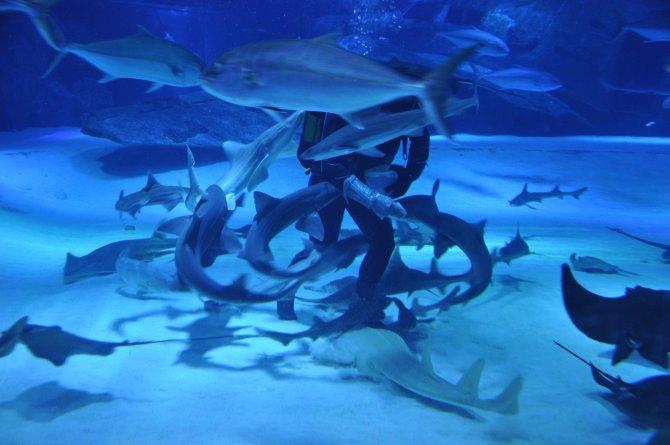 Antalya Aquarium'da fiyatlar yarı yarıya indirildi