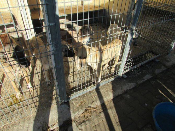 Açlıktan ölmek üzere olan köpek ve yavruları son anda kurtarıldı