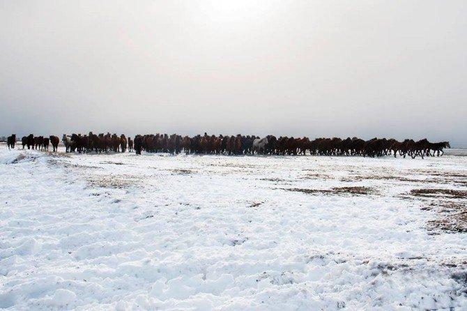 Yılkı Atları Aç Kalınca Köye Kadar İndi