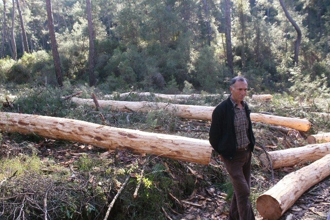 Ağaç Kesimi Köylüyü Ayağa Kaldırdı