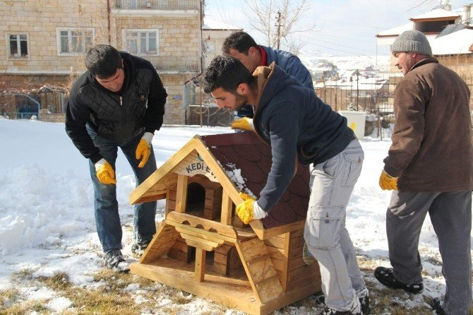 Nevşehir Belediyesinden Kedilere Özel Ev