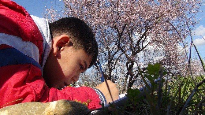 Antalya'da Bahar Habercisi Bademler Çiçek Açtı