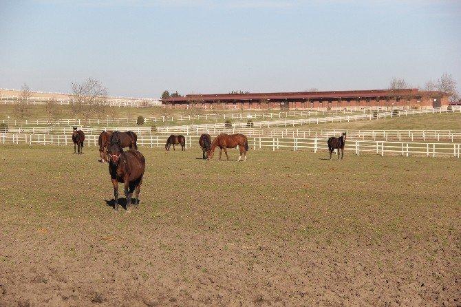 Vatandaşlar Milyon Dolarlık Atlara Artık Uzaktan Bakmayacak