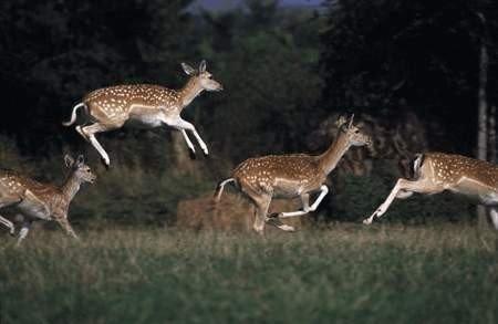 Güzelçamlı Milli Parkı'na 32 Alageyik 10 Bin 700 Keklik Salındı