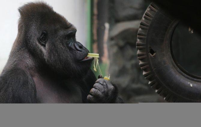 Türkiye'ye gıda ambargosu, Moskova Hayvanat bahçesini etkilemedi