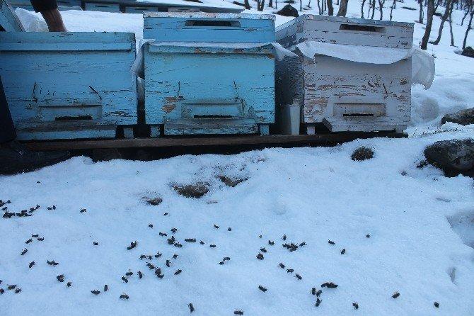 Soğuklara Dayanamayan Arılar Telef Oldu