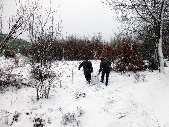 Yalova'da Yaban Hayata Yem Desteği Aralıksız Sürüyor