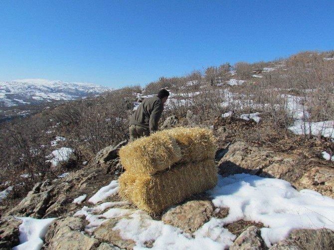 Karakoçan'da Yaban Keçileri İçin Saman Bırakıldı