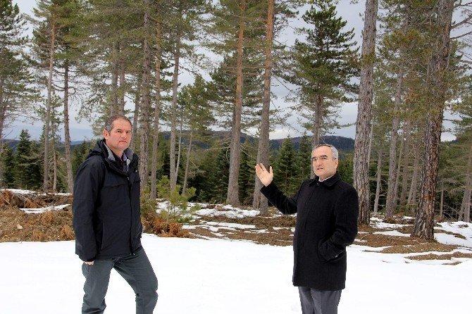 Kastamonu Orman Bölge Müdürü Hüseyin Dinçer: