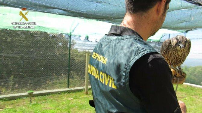 İspanya'dan Birleşik Arap Emirlikleri'ne şahin ihraç eden şebeke çökertildi
