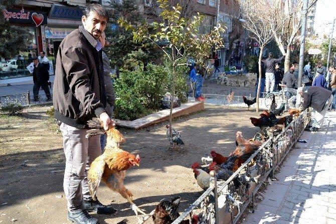 Siirt'te Kanatlı Kümes Hayvanlarına Rağbet Artıyor