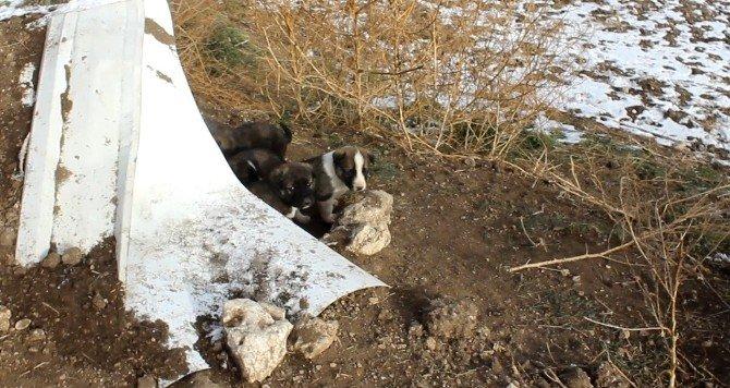 Hayvan Hakları Federasyon Başkan Yardımcısı Köpek Ölümlerini İncelemeye Geldi