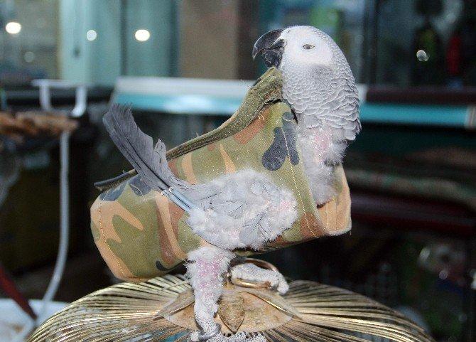 Strese Giren Papağana Elbiseli Tedavi