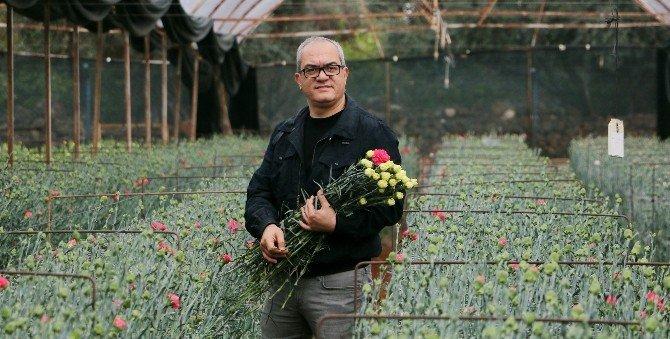 Avrupalı Sevgililere 30 Milyon Dal Türk Çiçeği
