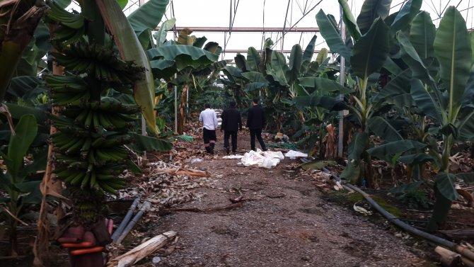 Ekvator krizi muz üreticilerini sevindirdi