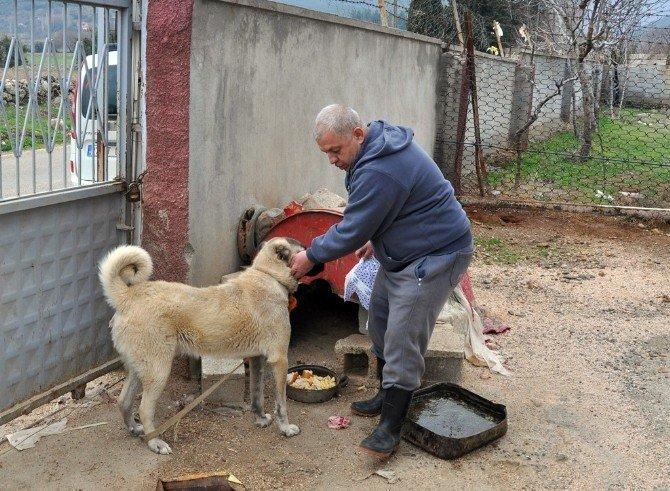 Kendini Sokak Hayvanlarına Adayan Emekli Polis