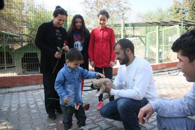 Sevgililer Günü'nde, sokak hayvanı sahiplendiler