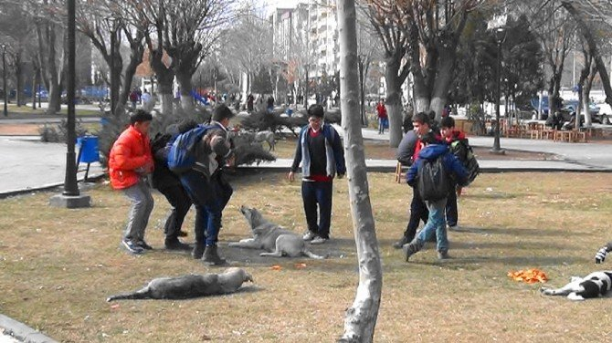Diyarbakır'da Başıböş Köpekler Korkutuyor