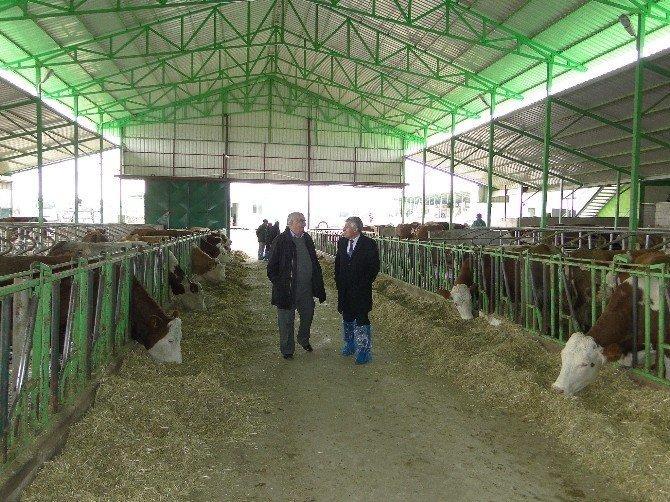 Malatya'da Hayvancılık Desteklemelerine Devam