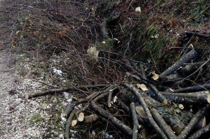Gölyaka'da Ormanda Çalışma